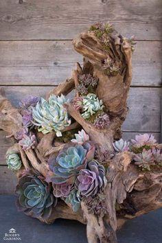 diy-garden-projects ⋆ The DIY Farmer Succulent Arrangements, Cacti And Succulents, Planting Succulents, Planting Flowers, Cactus Plants, Succulent Centerpieces, Cactus Art, Cactus Flower, Succulent Gardening