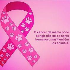 """""""Apesar de estarmos em #NovembroAzul, vale uma postagem do #OutubroRosa pra quem tem bichinhos em casa. Outubro Rosa - Câncer de Mama em Cadelas e Gatas,…"""""""