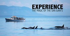 Deer Harbor Charters  | Orcas Island Whale Watching Since 1988