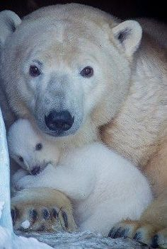 Bear mother and baby