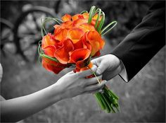 Orange Calla Lilies...my favourite flower!