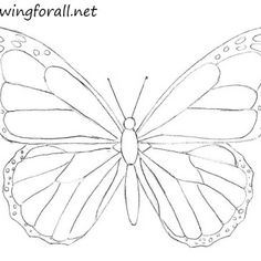How to Draw a Butterfly for Beginners