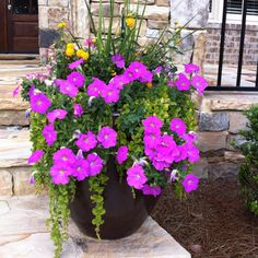 Beautiful DIY potted plant for front porch!  Wave petunias, ivy, lantana.
