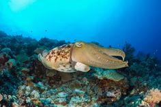 Palaos, sanctuaire marin, Pacifique