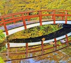 Autumn Leaves Photograph, autumn in the Netherlands. The colorful leaves and quirky wooden bridge makes a perfect reflection in the water as the ducks have an afternoon nap in the reflections.
