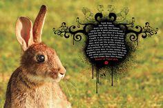 1-sva-rabbit