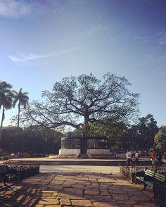 Árbol de la fraternidad Parque de la fraternidad La Habana #cuba #habanavieja