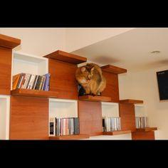 ナチュラル/キャットウォーク/猫/棚のインテリア実例 - 2014-10-07 19:07:32   RoomClip(ルームクリップ)
