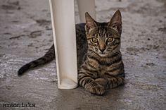 Bella, cat posing Cat Pose, My Photos, Poses, Cats, Animals, Gatos, Animales, Kitty Cats, Animaux