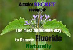 remove-fluoride-naturally