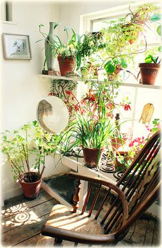 Happy plants on window shelves. / Magic Garden <3