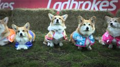 World's First Corgi Race - The Ladbrokes Barkingham Palace Gold Cup. The Ladbrokes corgi race might not accurately predict Will & Kate's baby's name, but it's pretty darn cute anyway.