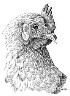 Kippetje - Chickie. Pen en Oost-Indische inkt; 2013