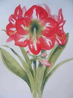 Christmas Watercolor Paintings | Christmas Amaryllis- Reproduction of Watercolor Painting-Red Flower