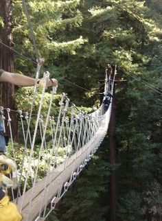 Redwood Canopy Tour at Mount Hermon