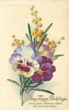 MANY HAPPY BIRTHDAYS pansies & yellow flowers