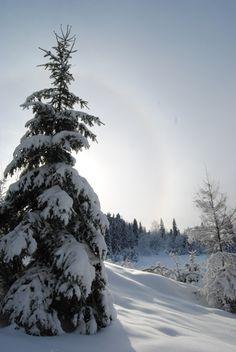 #Szczawnica #Homole #Jaworki #góry #zima #spacer
