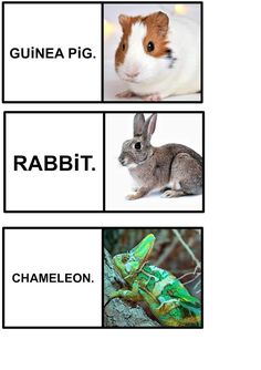 Dys astuces et conseils: Les animaux en anglais. Chameleon, Guinea Pigs, Rabbit, Animals, Tips, Bunny, Rabbits, Animales, Animaux