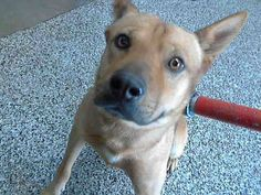 SAFE --- GREG - ID #A473138 (MUST EXIT ON 10/7) Kennel 66 ~ upset at intake Confiscated w/ his female terrier buddy #A473139 Cari's VIDEO 9/30 (got a lot of tail wagging today from Greg): http://youtu.be/YpbcXo0UzYk San Bernardino City Shelter https://www.facebook.com/photo.php?fbid=10202188502707917&set=a.3186215868195.111836.1649756531&type=3&theater