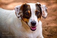 Dog... by eliasvidart #food #yummy #foodie #delicious #photooftheday #amazing #picoftheday