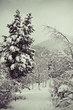 I am an age old tree. I am stars in white snow.: at the cabin : the snow came and so we went out