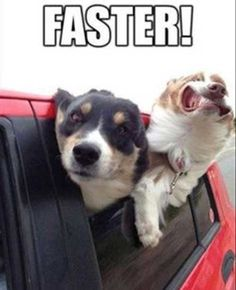 Faster!!!! http://pewpaw.com/?p=10788
