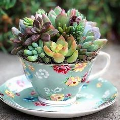 40 Easy DIY Teacup Mini Garden Ideas to Add Bliss to Your Home Fantastische 40 einfache DIY-Teetasse Succulent Gardening, Succulent Terrarium, Container Gardening, Succulent Ideas, Organic Gardening, Urban Gardening, Kitchen Gardening, Gardening Books, Flower Gardening