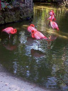 Ardastra Gardens, Nassau Bahamas