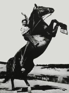 FURRY.  Die 114-teiligeFernsehseriewurde von 1955 bis 1960 in denUSAim Schwarz-Weiß-Format vonITC Entertainmentund TPA produziert und ab 1958 inDeutschlandwöchentlich im Nachmittagsprogramm desErsten Deutschen Fernsehensausgestrahlt. Jede Folge umfasste etwa 25 Minuten Sendezeit.  Entstanden ist die Serie nach einem Jugendbuch von Albert G. Miller aus den frühen 1950er-Jahren, welches später auch als gebundene Ausgabe auf dem deutschsprachigen Markt erschien. Serie und Buch spielen…