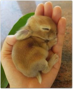 Cute Baby Animals Desktop Wallpaper round Baby Animals Pictures For Preschoolers any Cute Animals That Start With A, Kittens En Puppies, Baby Farm Animals Clipart Baby Animals Super Cute, Cute Baby Bunnies, Cute Little Animals, Cute Funny Animals, Cute Cats, Baby Owls, Tiny Bunny, Cutest Bunnies, Pet Bunny Rabbits
