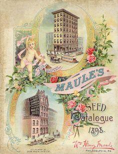 Maule's 1898