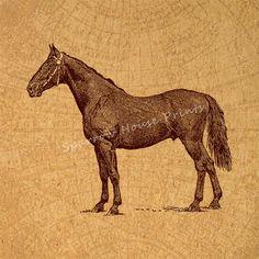 Antique Print Stallion Horse Artwork Home by SparrowHousePrints
