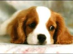 Resultado de imagen para perros mas lindos del mundo