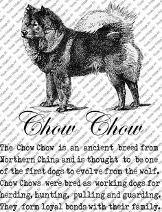 CHOW CHOW DOWNLOAD Instant Digital Vintage Art with Description Printable Frame Cards Fabric Transfer Iron On by RosiesVintageArtShop on Etsy