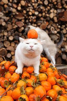柿、かき:persimmon                                                                                                                                                                                 もっと見る