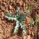 ¿Malas hierbas? Conoce el tipo de suelo a través de las hierbas espontáneas | ECOagricultor