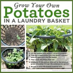 Backyard Vegetable Gardens, Garden Plants, House Plants, Gardening Vegetables, Potato Gardening, Pot Plants, Veg Garden, Fruit Garden, Terrace Garden
