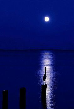 New Nature Photography Night Moonlight La Luna 31 Ideas Beautiful Moon, Beautiful World, Beautiful Places, Beautiful Pictures, Beautiful Scenery, Simply Beautiful, Shoot The Moon, Blue Moon, Night Skies