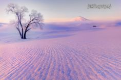 Taken awhile back while spending some winter days in the Palouse of Washington State. One of the best places to visit for winter beauty ..lot of winter rolling hills and lone trees..