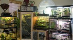 Terra Show your Tank set ups / racks and reptile rooms The Pangea Forums Crested Geckos & More reptiles Crested Forums Geckos Pangea racks Reptile reptile room rooms Set Show Tank Terra ups Reptile Cage, Reptile Habitat, Reptile Room, Reptile Enclosure, Terrariums, Terrarium Reptile, Aquarium Terrarium, Terrarium Diy, Reptiles And Amphibians