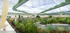 industrial greenhouse - Google Search