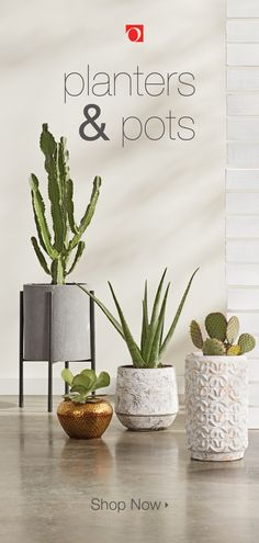 Display your house plants in style with beautiful pots and planters from Overstock. From bold metallic pots to elevated plant stands, we have a huge selection of ways to give your plants a style you love.   #houseplants #indoorplants #planters #plants House Plants Decor, Plant Decor, Fake Plants, Indoor Plants, Simple Birthday Decorations, Christmas Decorations, Inspired Homes, Rustic Design, Entryway Decor