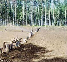 Монахи Ниловой пустыни за работой: посадка картофеля Фото С. М. Прокудина-Горского. 1910 г.