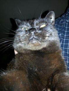 My cat's selfie XD
