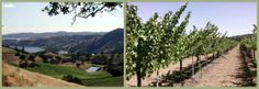 Bell Wine Cellars · Our Vineyards - Napa Valley