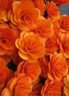 background background orange Flowers orange aesthetic 62 id Orange Aesthetic, Rainbow Aesthetic, Aesthetic Colors, Flower Aesthetic, Aesthetic Grunge, Fleur Orange, Jaune Orange, Orange Flowers, Orange Color