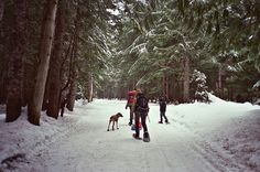 Want to snow shoe!
