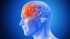ASCOT: Amlodipine Cuts Stroke, Not Dementia Over Decades Internal Carotid Artery, Vertebral Artery, Occipital Lobe, Myocardial Infarction, White Matter, Atrial Fibrillation, Regenerative Medicine, Brain Injury, Holistic Nutrition