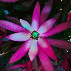 We dream to accomplish. #shotoniphone #flower #nature #loves #botd #bestoftheday #za #sero #bf #purple #darkroom #life #you #reborn Plants, Photography, Instagram, Photograph, Fotografie, Photoshoot, Plant, Planets, Fotografia