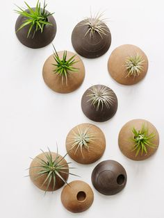 Customized Set of Wall Planters MADE TO ORDER. Wall Planters Unglazed for Air Plants in Chocolate and Hazelnut Clay Bodies from Cor Pottery etsy Mini Terrarium, Air Plant Terrarium, Air Plants, Indoor Plants, Ceramic Planters, Planter Pots, Hanging Planters, Wall Planters, Fleur Design